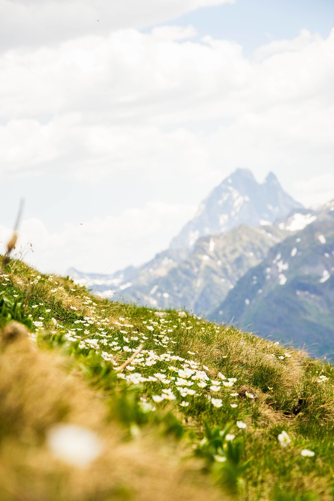 macro fleurs avec pic du midi en fond