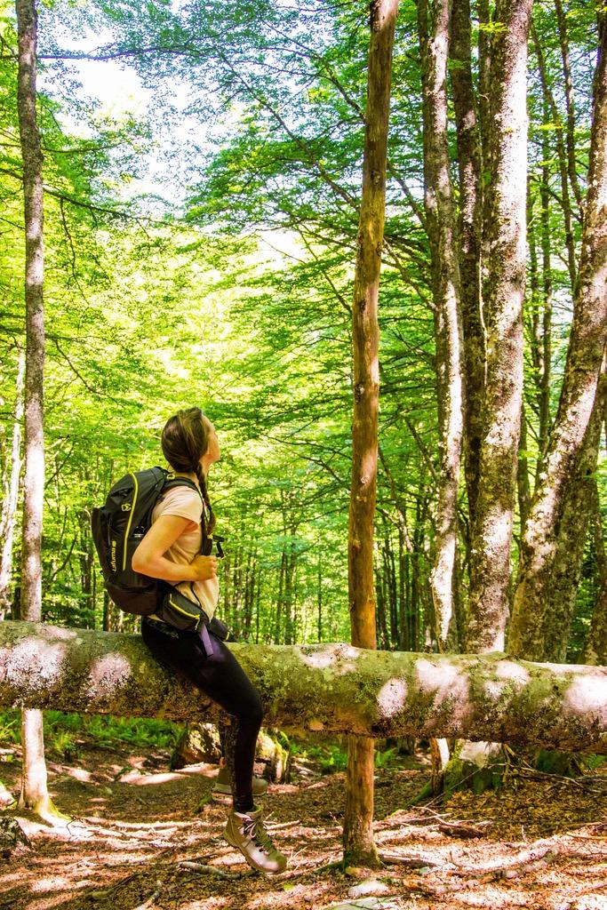 randonneur assis sur tronc d'arbre dans une forêt