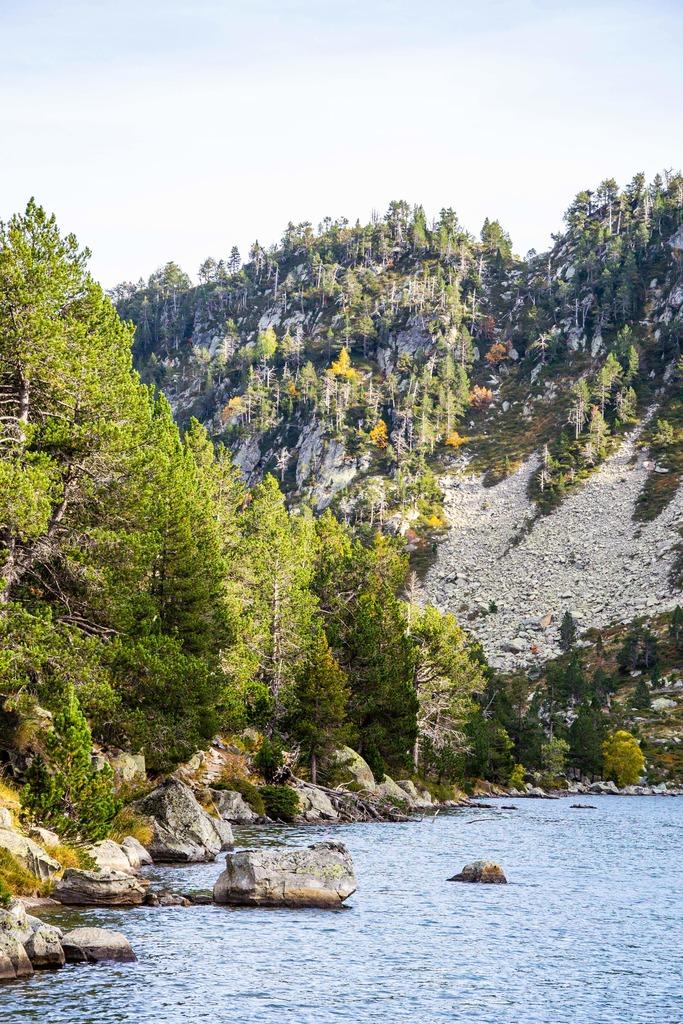 lac avec forêt sous l'heure dorée