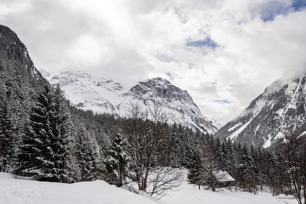 montagne avec forêt enneigé