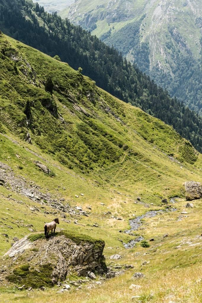 cheval sur promontoir montagne