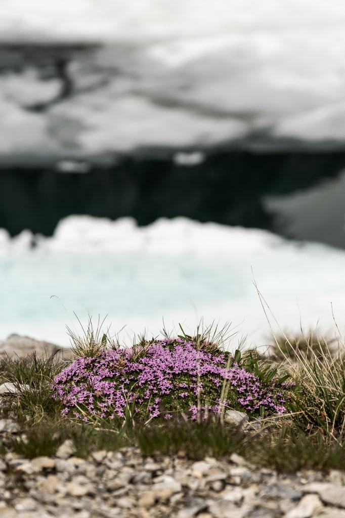 fleurs sauvages avec lac glacé