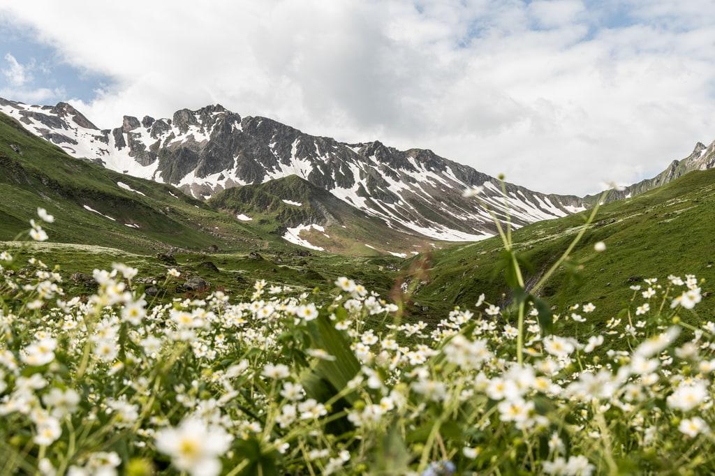 fleurs sauvages montagnes