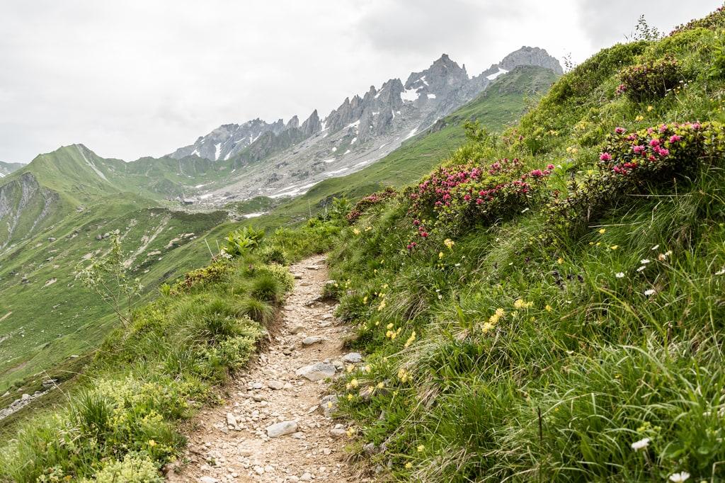 sentier randonnée avec fleurs et montagnes