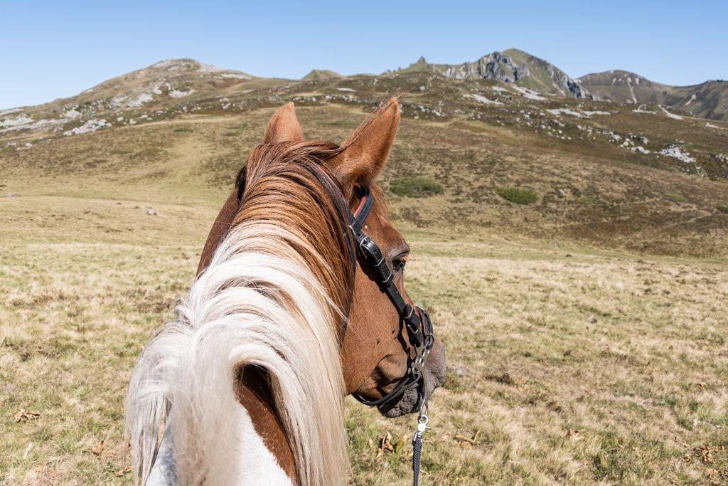 cheval randonnée Sancy
