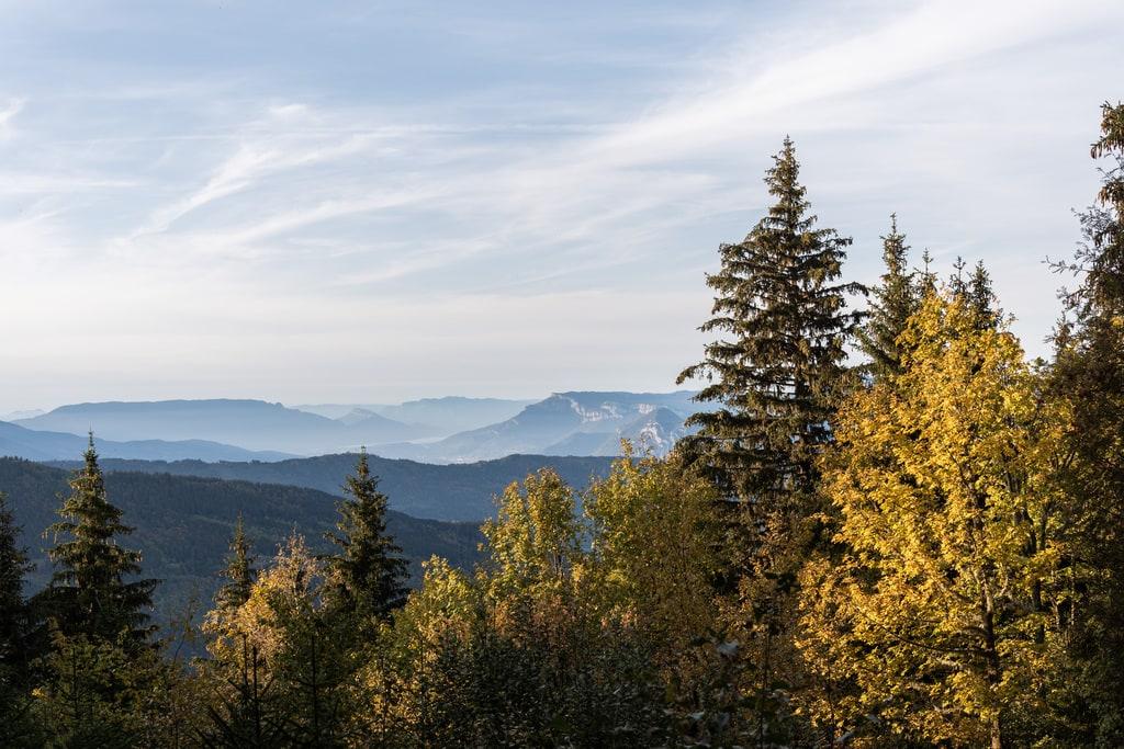 arbres montagnes vue