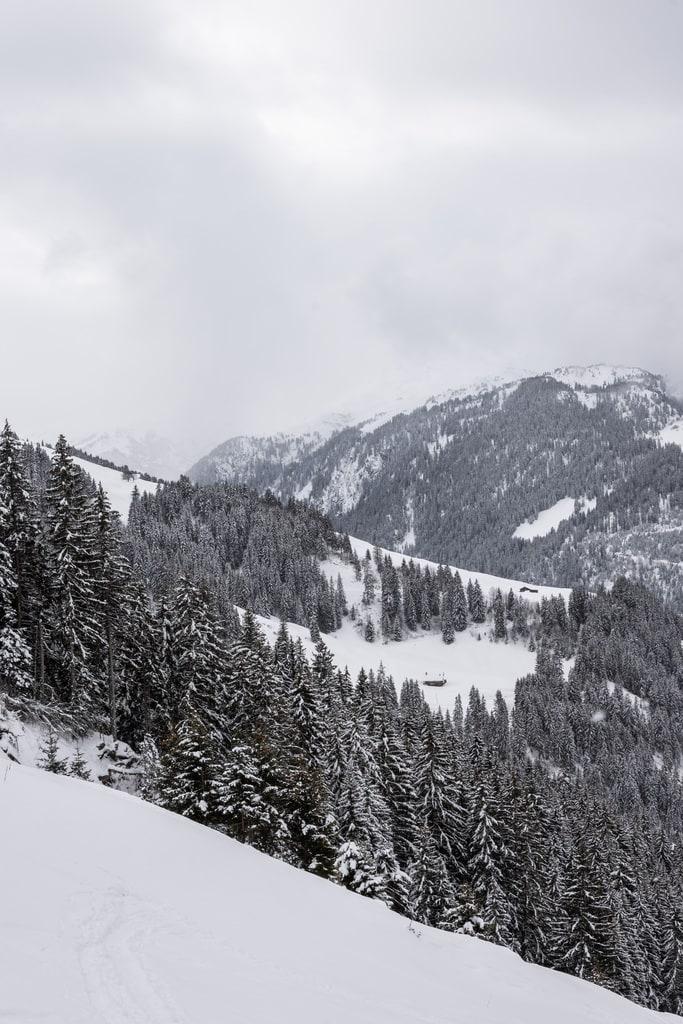 montagne et sapins enneigés
