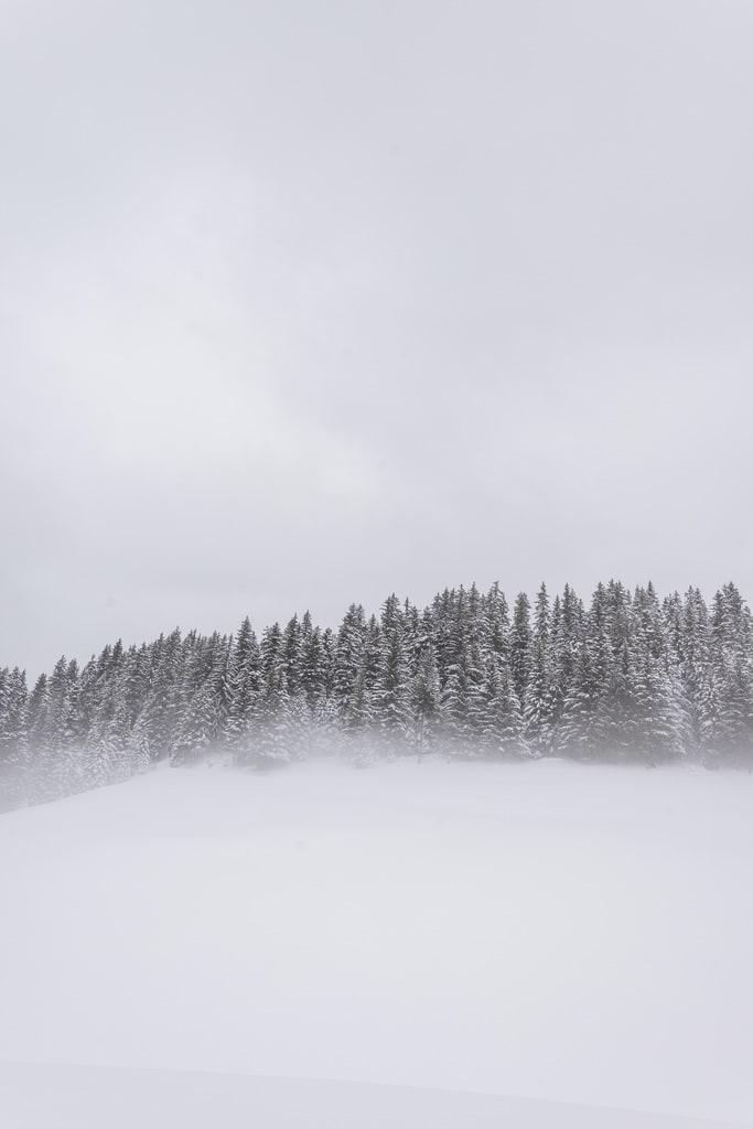sapins enneigés dans brouillard