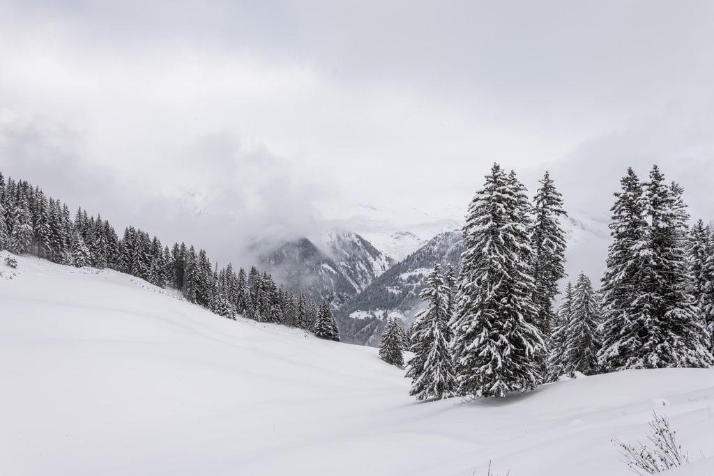 montagne et sapin enneigés