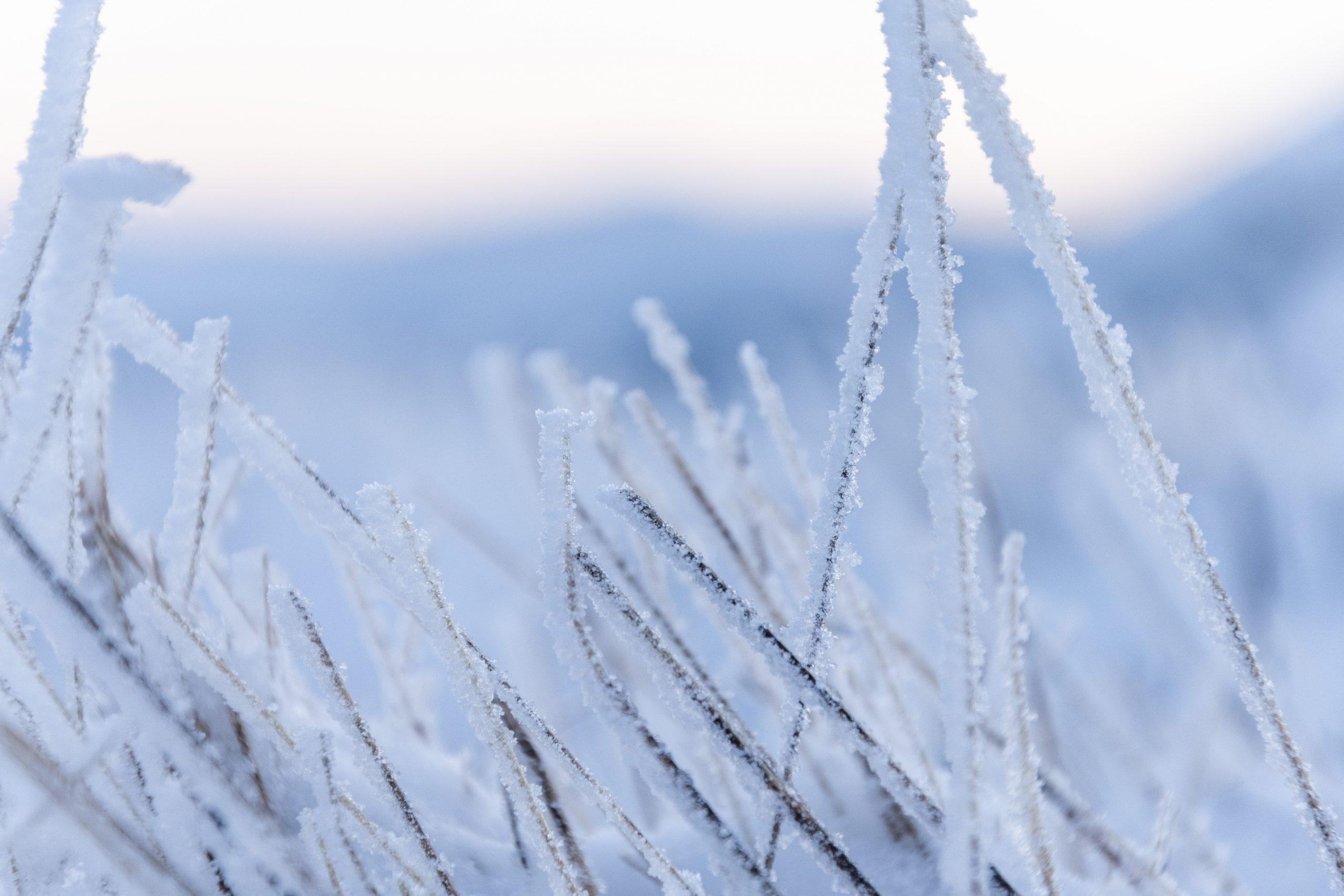 detail herbe gelée