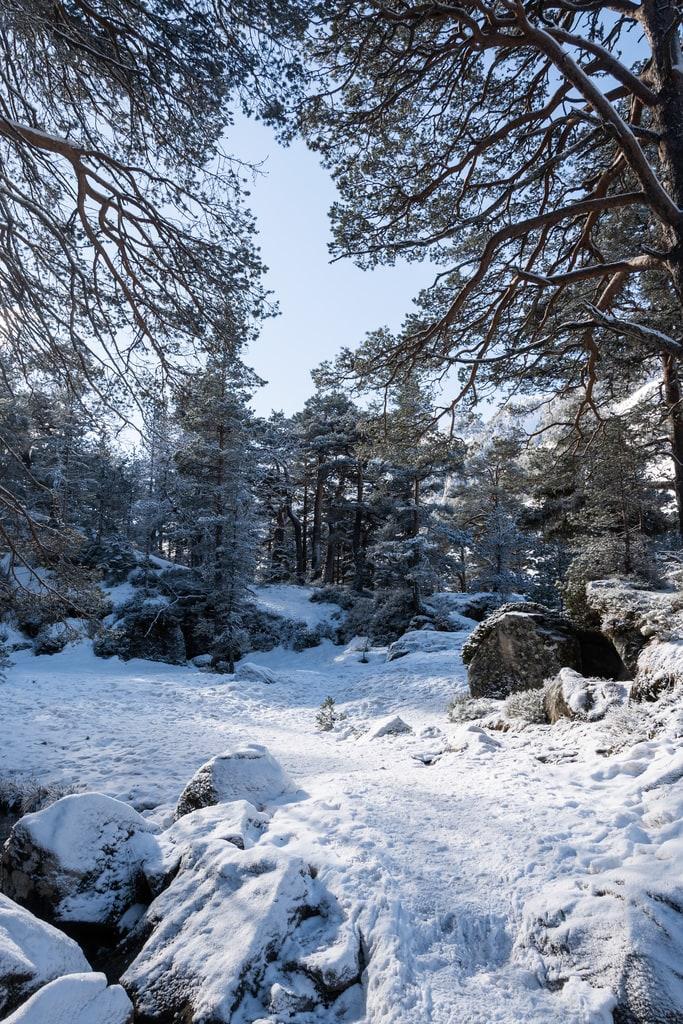 sentier foret neige