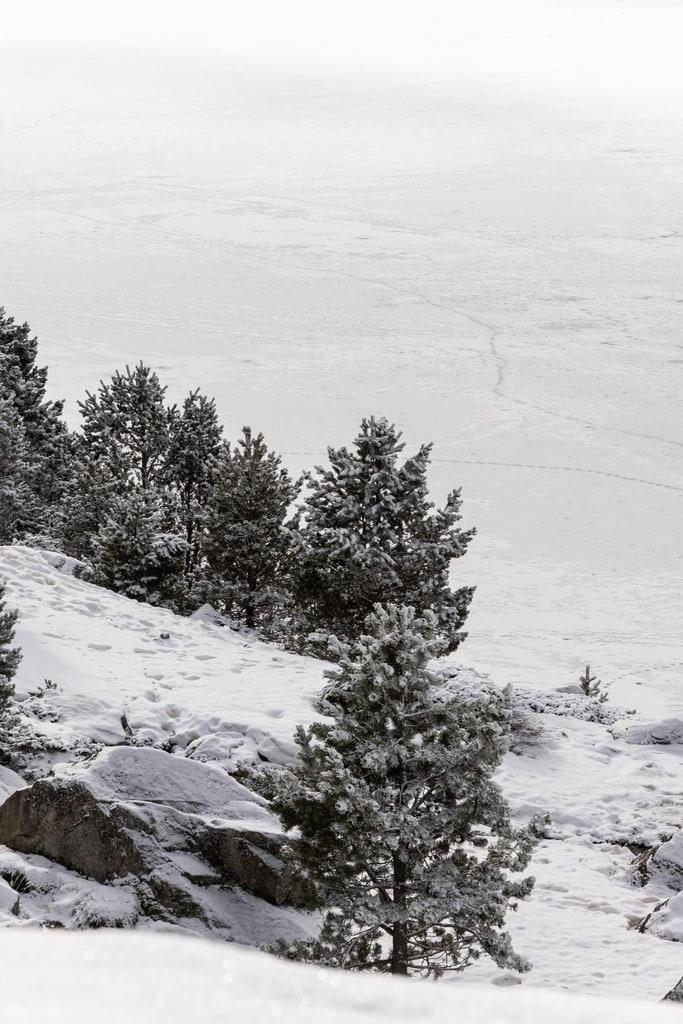 sapins lac gelé