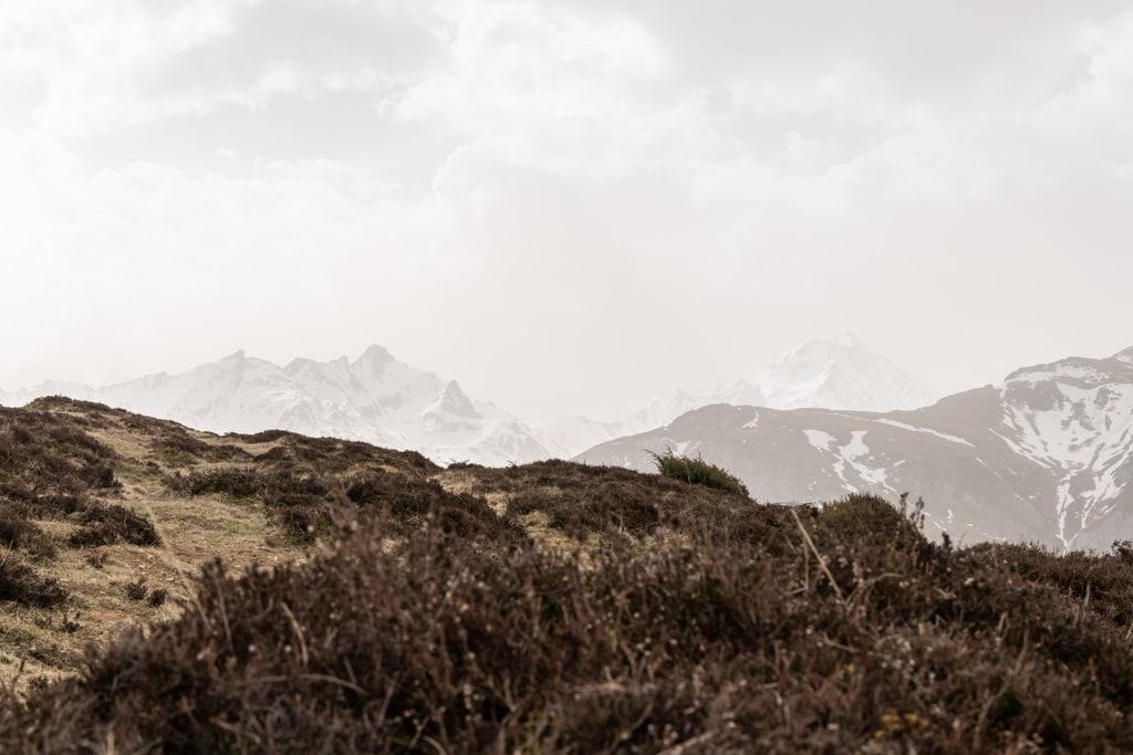 végétation et montagne en fond