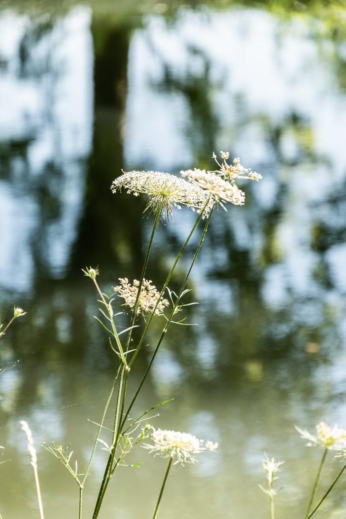 détail fleur