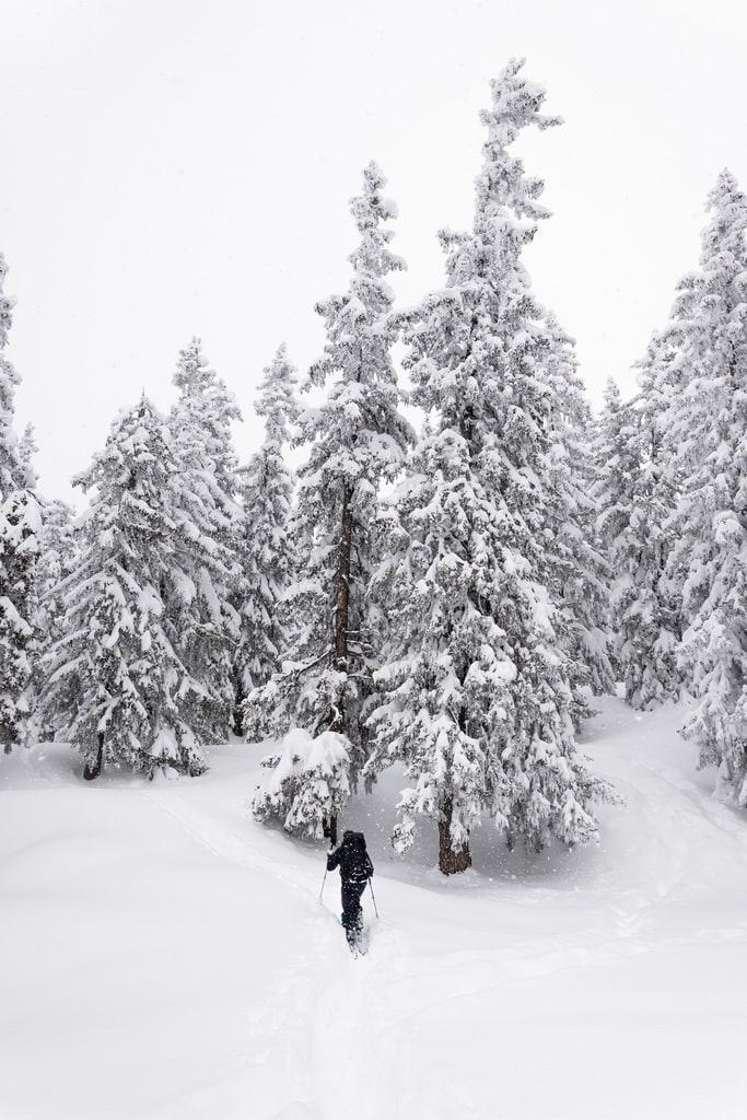 skieur dans foret