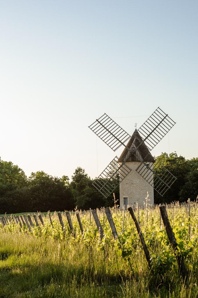 moulin devant vignes