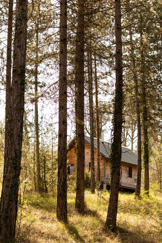 cabane en bois entre les arbres