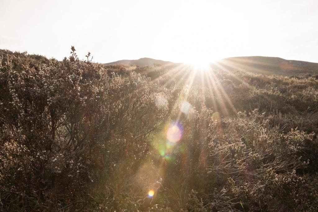 rayons du soleil dans bruyères