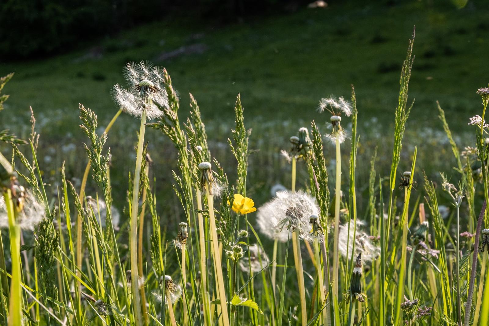 détails fleurs sauvages
