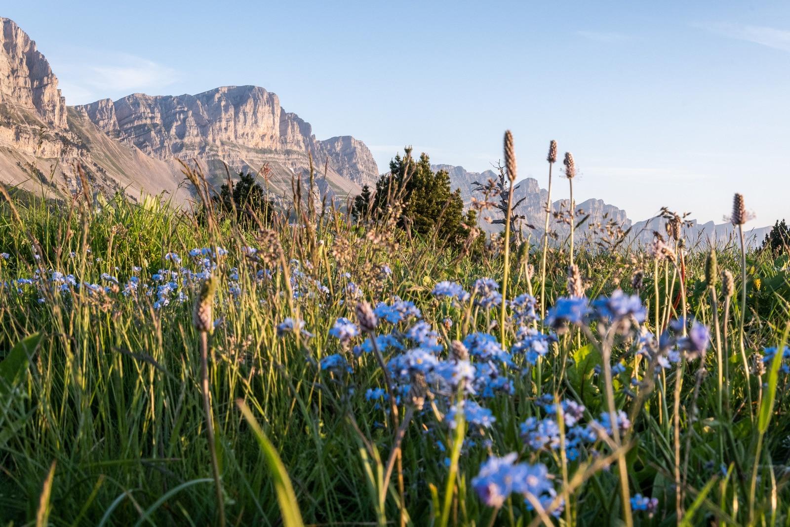 montagnes et fleurs sauvages