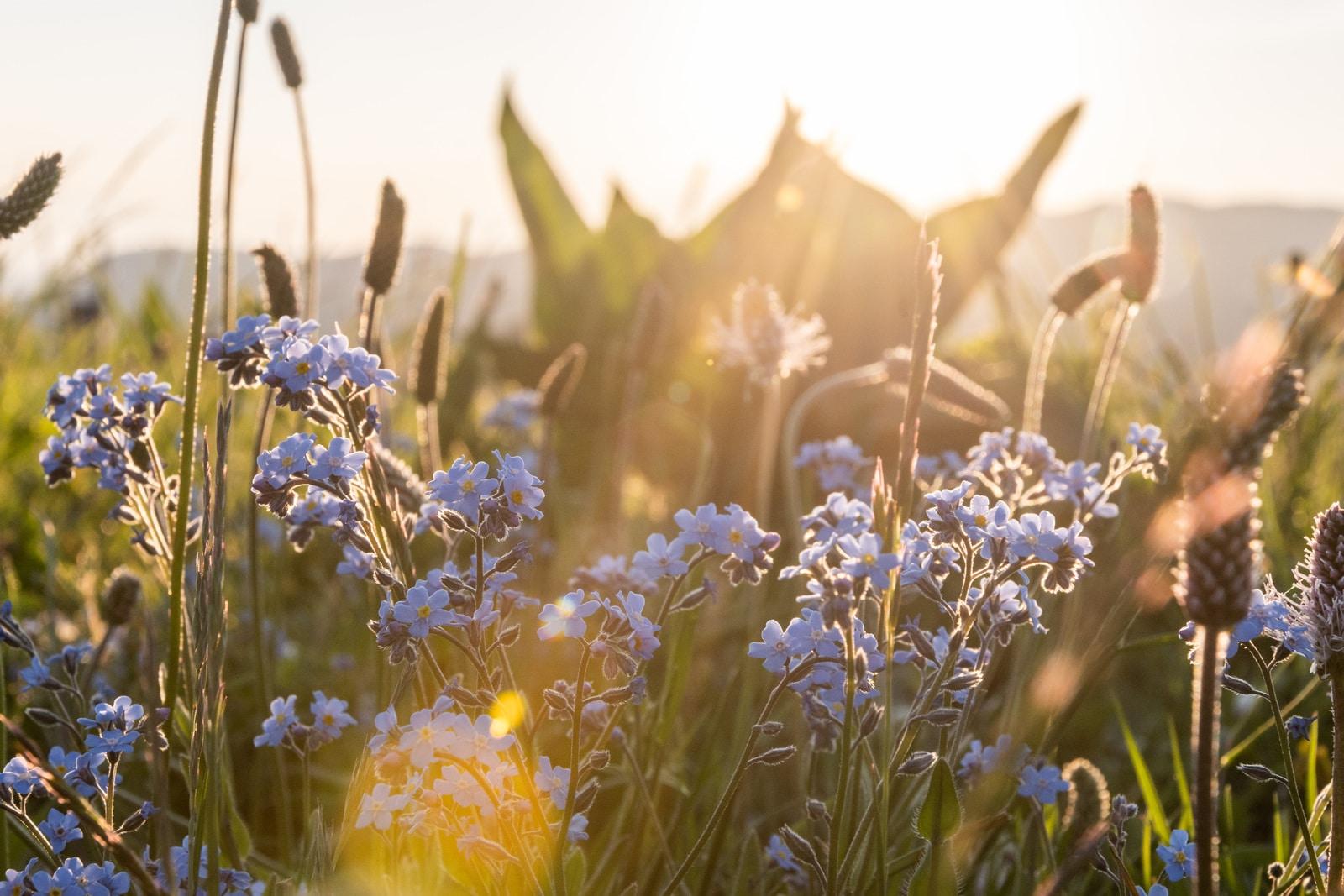 golden hour fleurs sauvages