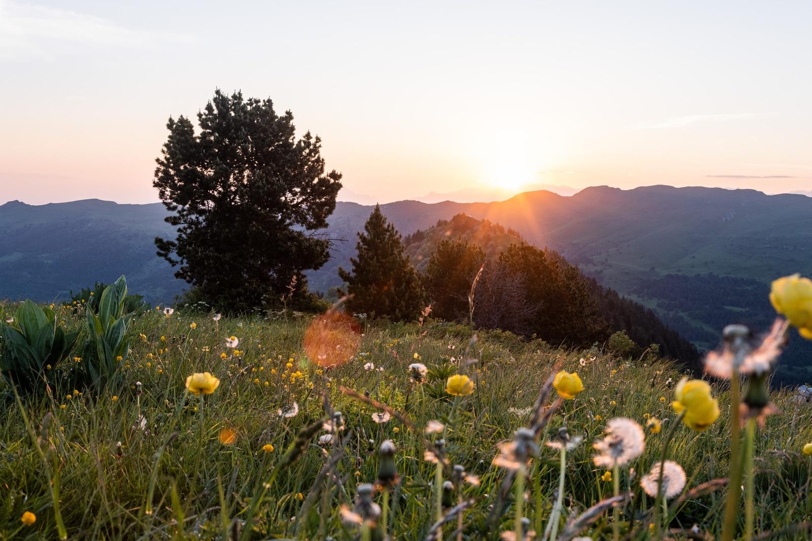 lever de soleil sur fleurs sauvages