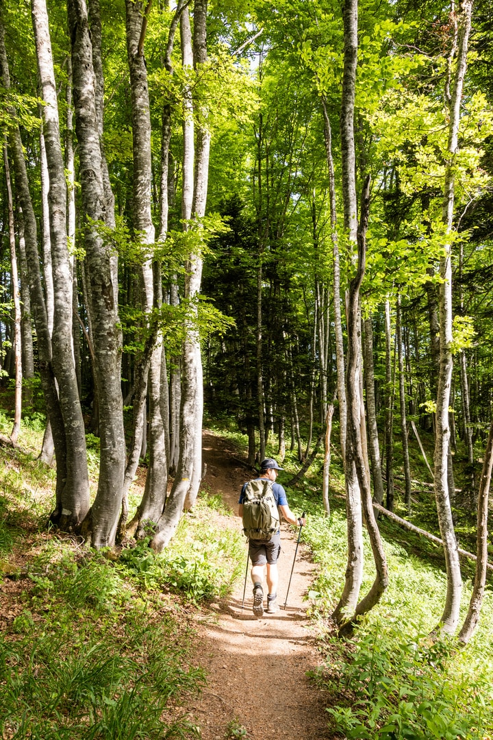 randonneur sur sentier forestier
