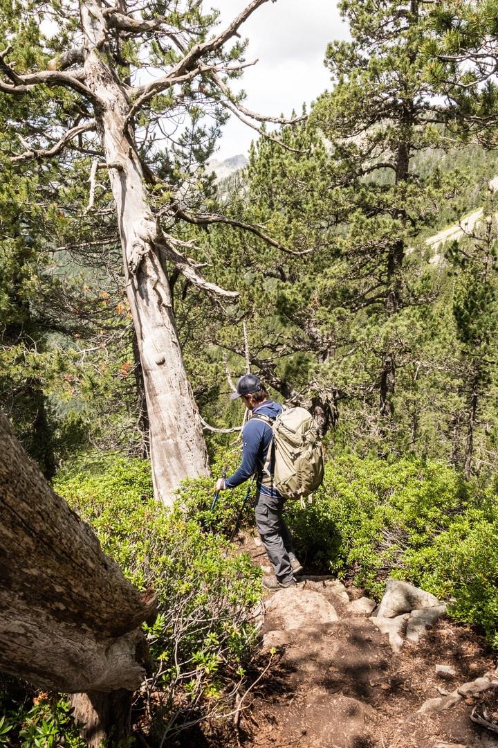 randonneur sentier bois