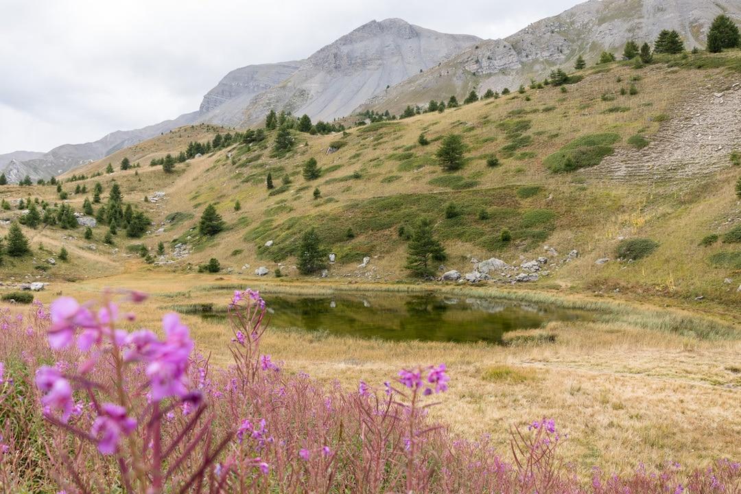lac de montagne avec fleurs devant