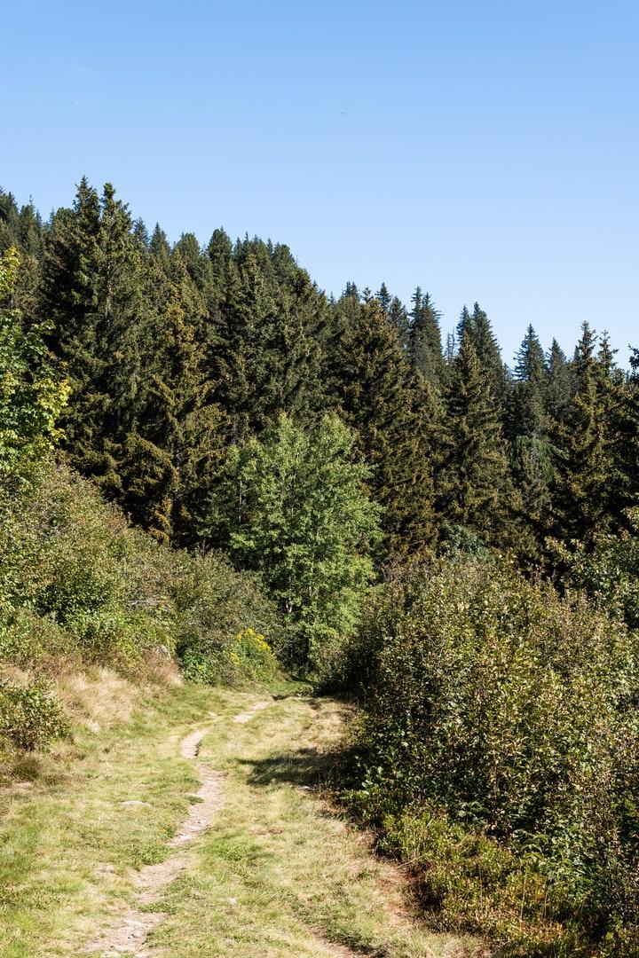 sentier vers forêt