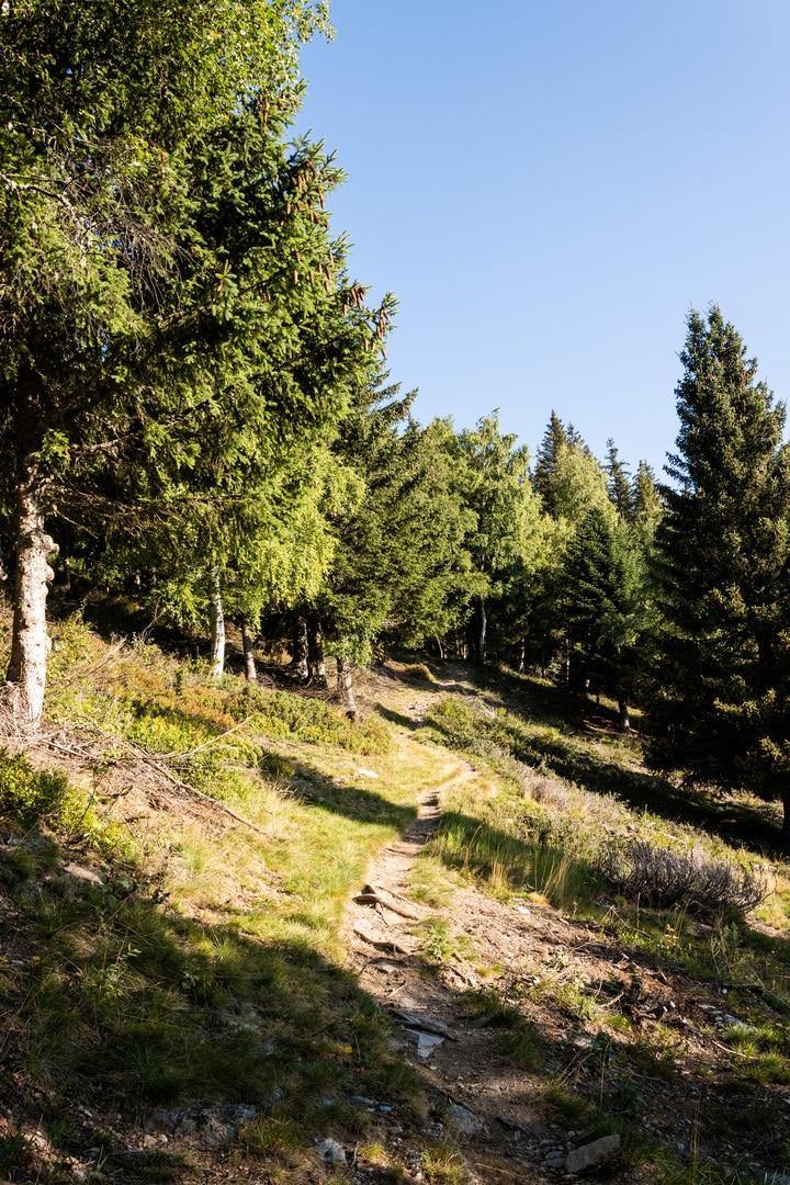 sentier vers les bois
